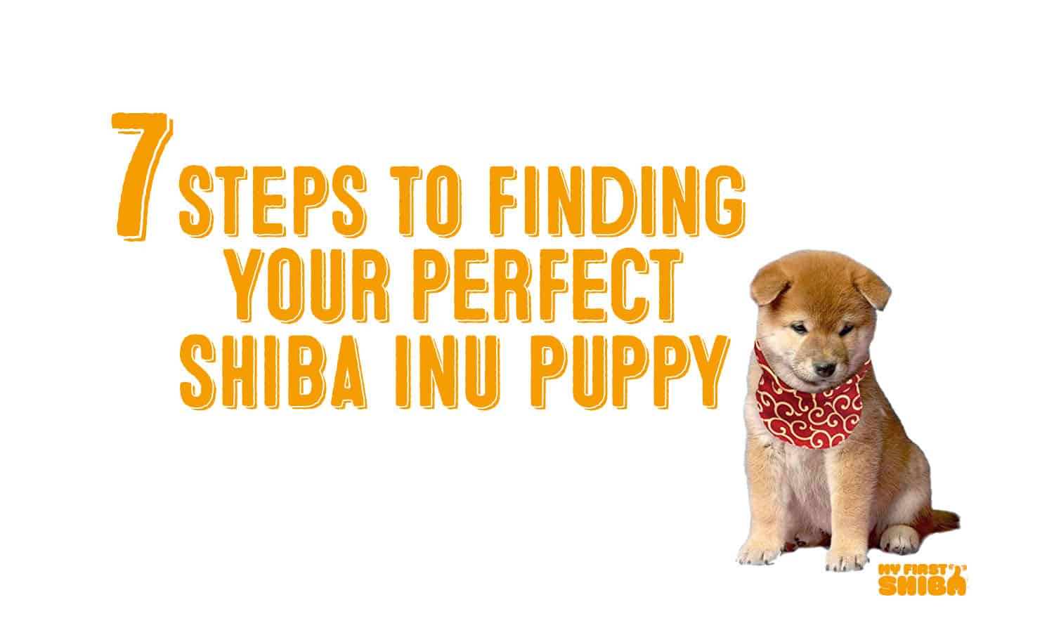 7 steps to find perfect shiba inu puppy