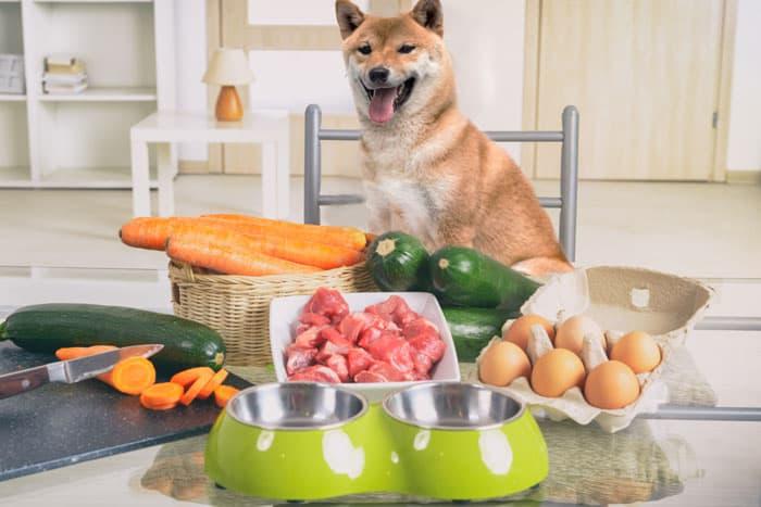 shiba inu eating raw fresh food diet