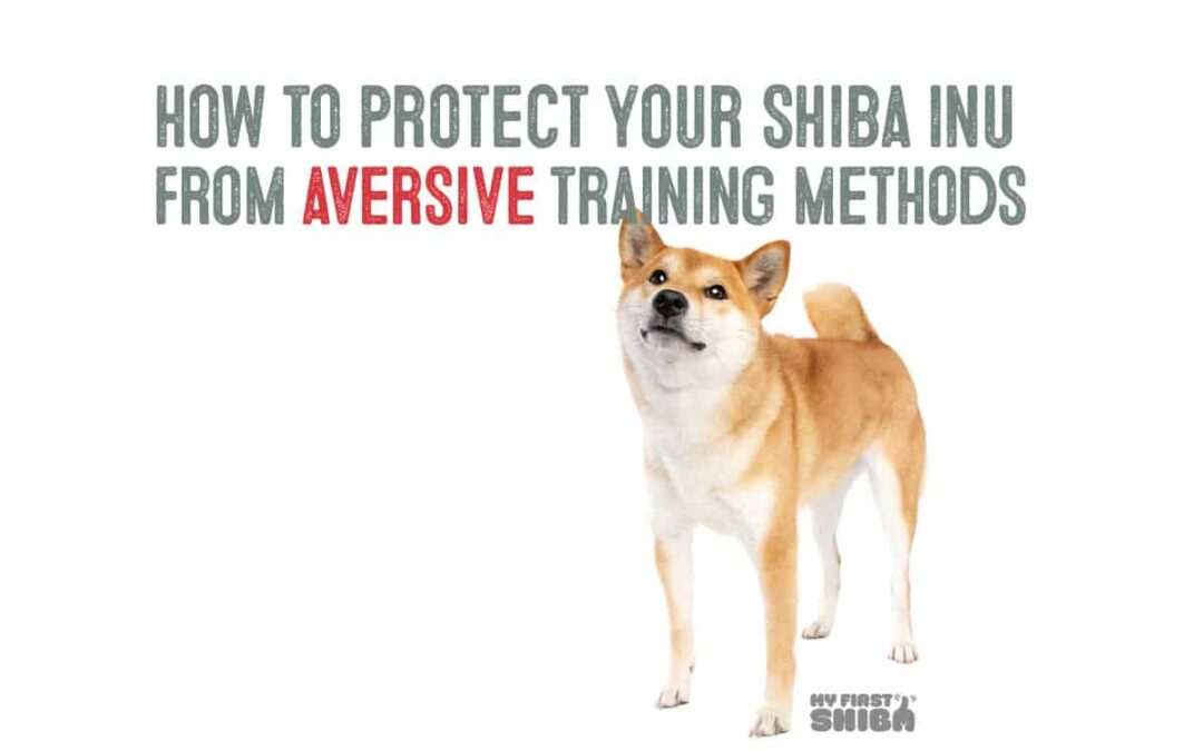 how to protect your shiba from aversive training methods cover image