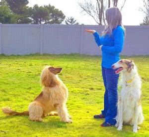Rain Jordan certified canine behavioral consultant