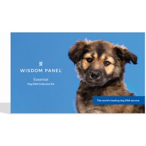 wisdom panel dog dna test recommended for shiba inu