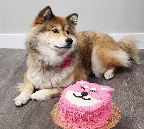 shiba inu birthday cake