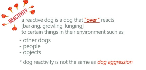 what is a reactive dog?