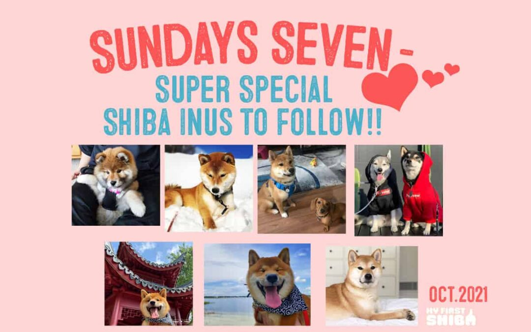 sunday's seven super special shiba inus to follow for october 2021