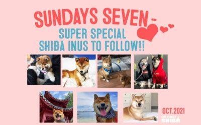 Sundays Seven – Super Special Shiba Inus To Follow!! – OCTOBER 2021